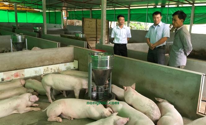 Raising pigs with herbs still has the output