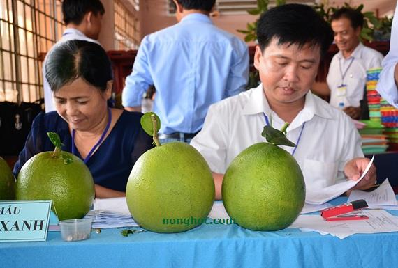 Angry with the fruit trees at the 'Tree Festival, delicious fruit' in Ben Tre